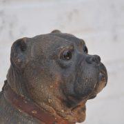goldcheiderdog116h